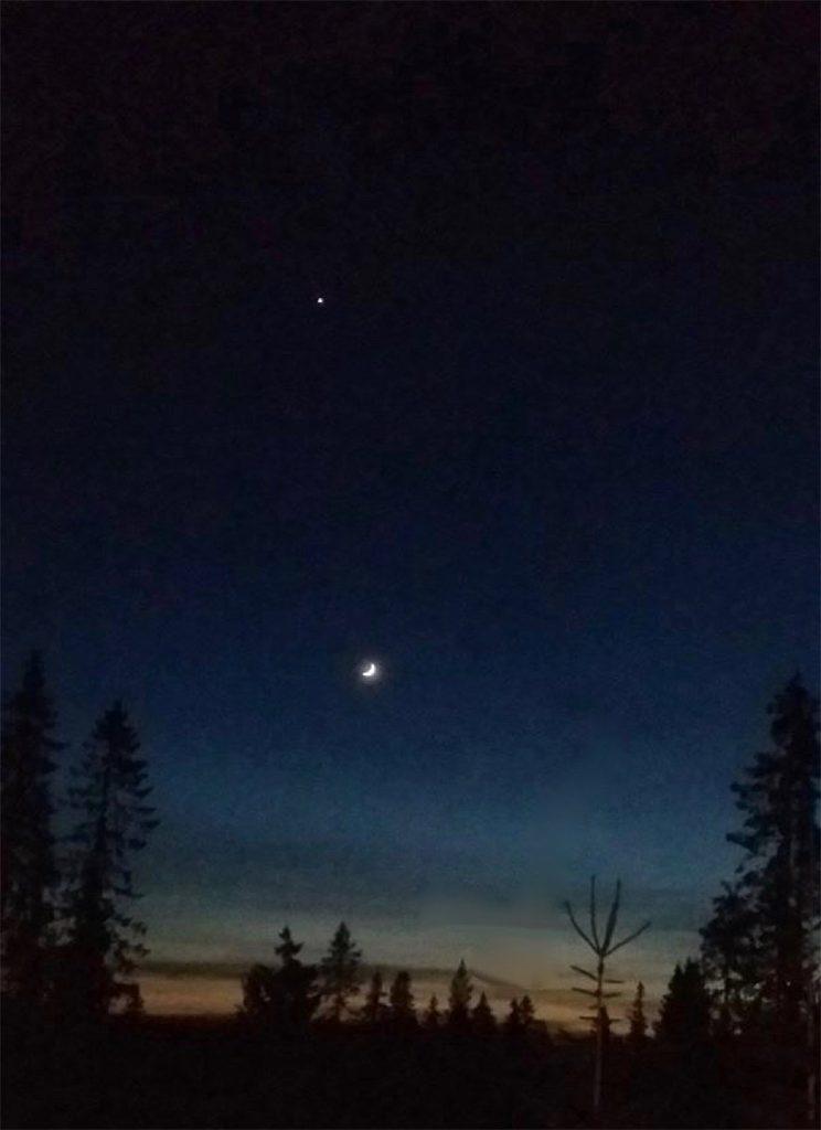 Nattehimmel over skogen